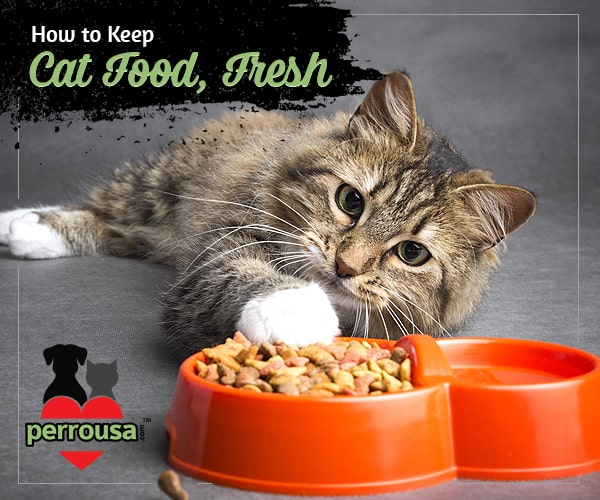 How to keep your Best Pet Food for your Cat Fresh?