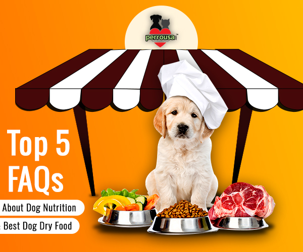 Top 5 FAQs about Dog Nutrition and Best Dog Dry Food