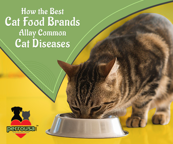 How the Best Cat Food Brands Allay Common Cat Diseases?