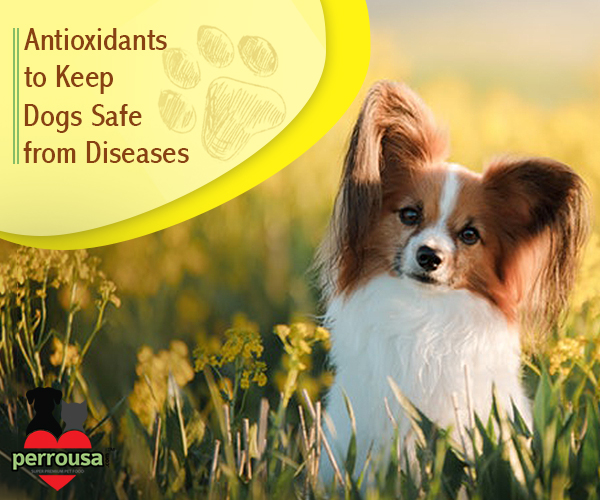 Which Antioxidants Will Keep your Dog Safe from Diseases?
