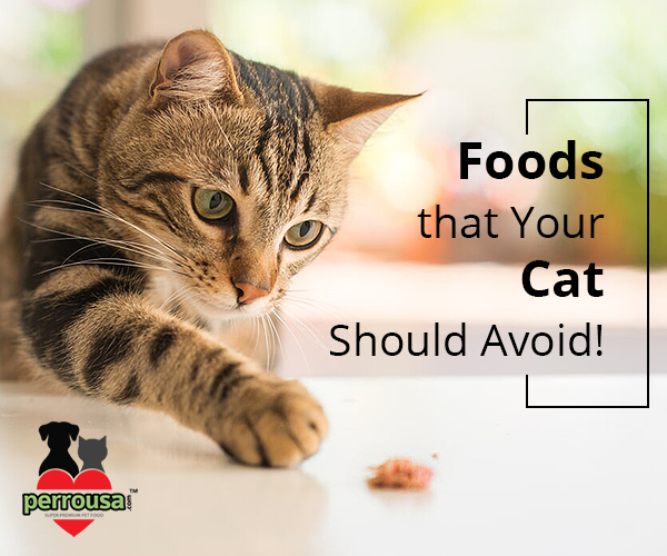 4 Food Items that are Harmful to Your Cat's Health