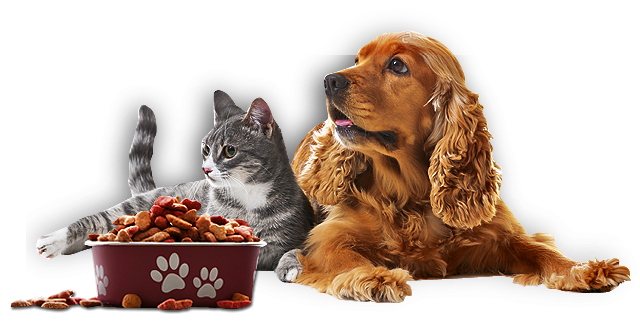 Dogs and cats having all natural pet food for nutrition